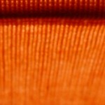 Cropped Horizontal Orange